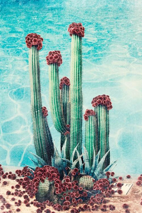 Paper   |   Scissors   |   Stone - Lot 38, Nadia Attura, Cactus Pool