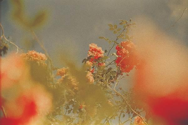Ruvan Wijesooriya, Flowers in Skane, The Auction Collective