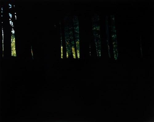Studio Sale | Rachel McDonnell - Lot 20, Rachel McDonnell, Dark Woods III